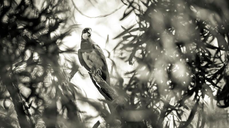 030319 birds _1.JPG