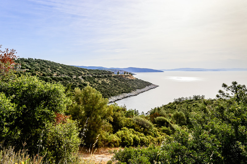 a coastal view with greenery in the foreground