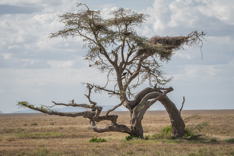 Tanzania_Feb_2018-877.jpg