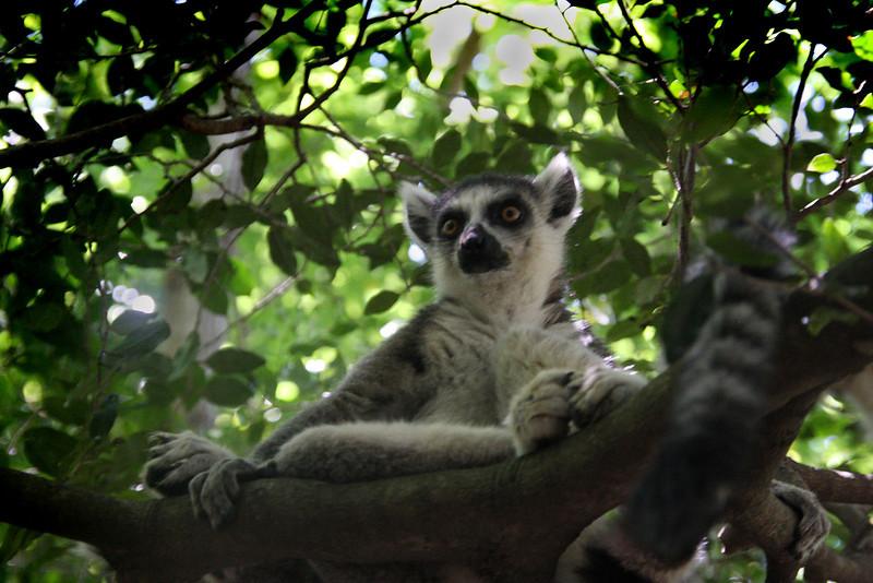Madagascar, Fauna & Flora 12 Oda.jpg