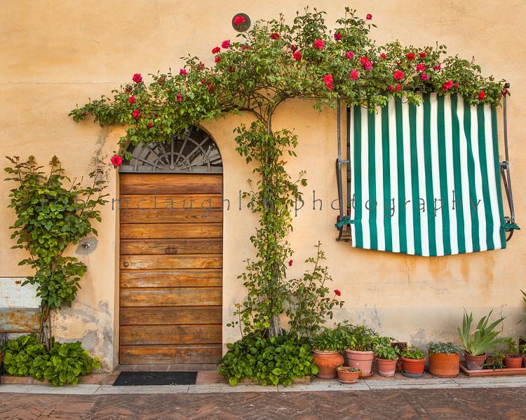 Roses Above , Montepulchiano , Tuscany
