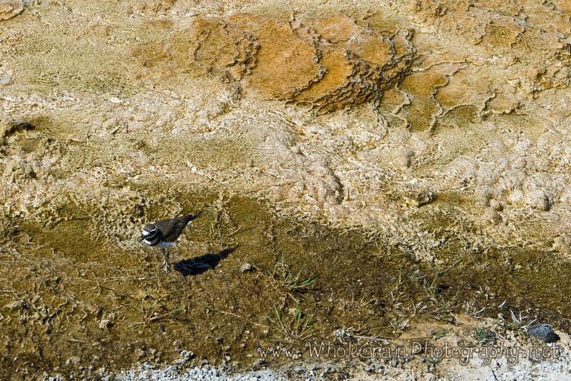 20100713_Yellowstone_2808.jpg