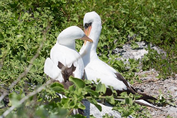 The Beautiful and Bizarre Galapagos Islands - May, 2017