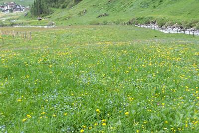 Lush Grasland in Hintertux, Austria