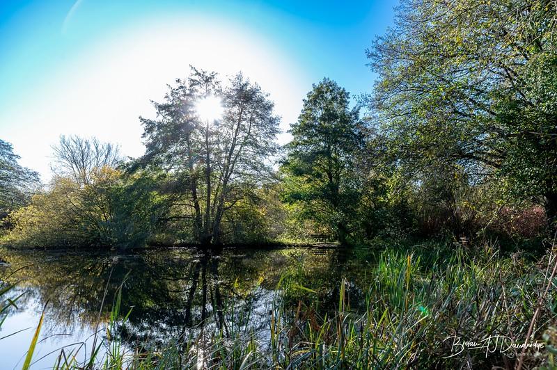 Woods Mill-5322.jpg