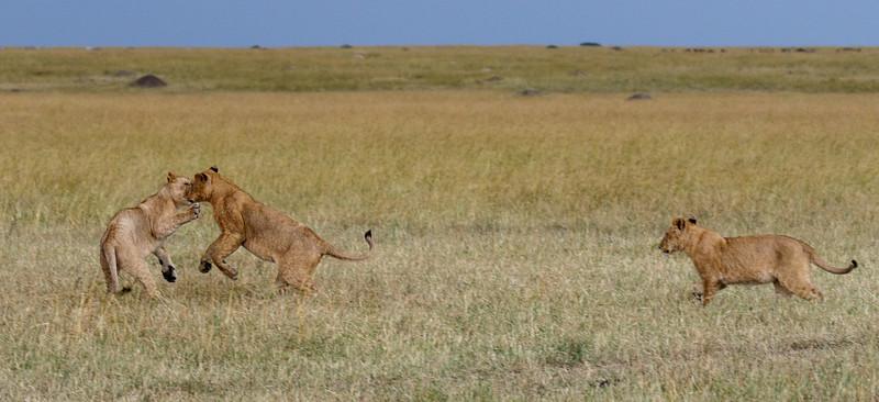 Kenya 2015-06072.jpg