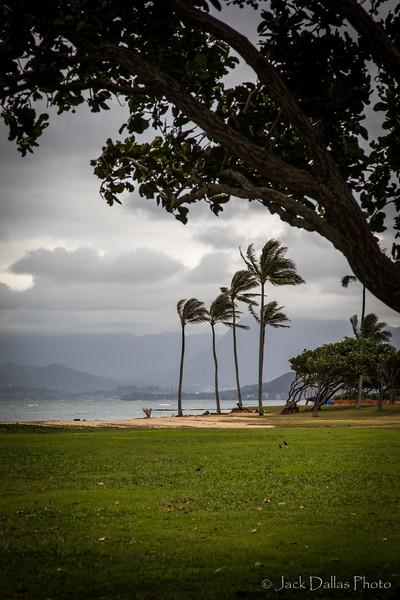 Oahu DF0A2433.jpg