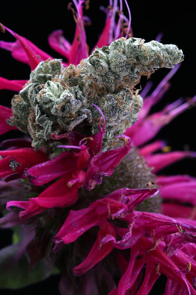 09-25-19 Flowersmithllc GMO