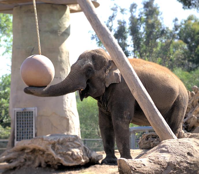 IMG_1444 -1 Elephant.jpg