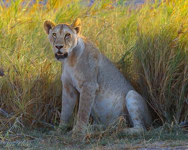 The Cats of Kenya