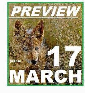 17 MARCH (preview)