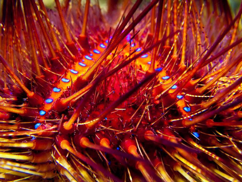 Aquarium_CAS 03.jpg