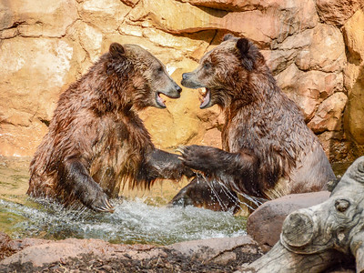 CA/San Diego Zoo - March, 2018