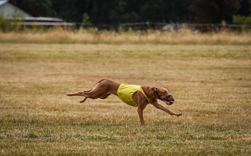 pharoahhound-21.jpg