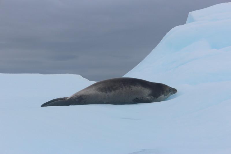 Antarctica 280.JPG