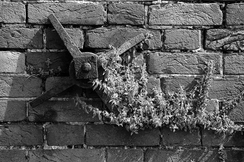 Bricks, rust, and vines at Fort Morgan.