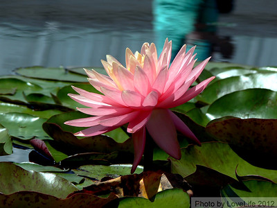 New York Botanical Garden May 31, 2012