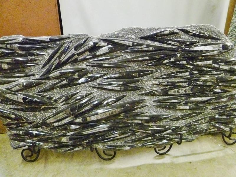 polished fossil slab
