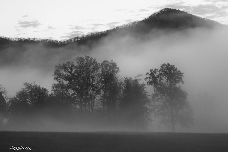 Black & White of trees in the fog.