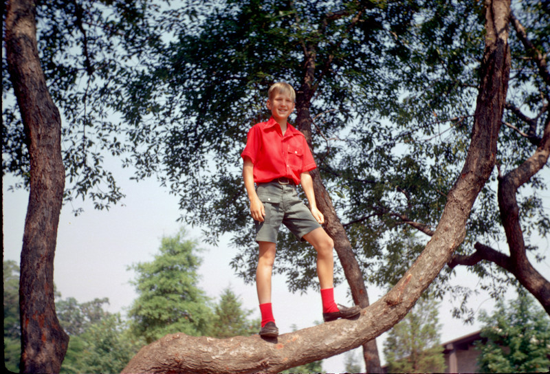 robert in a tree.jpg