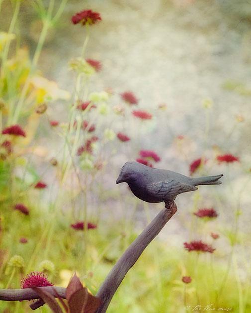 birds and bloom, summer, garden, lazy days