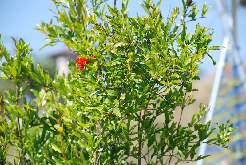 EarthDayLatino_FloraPlanting_2011--04-15_13.JPG
