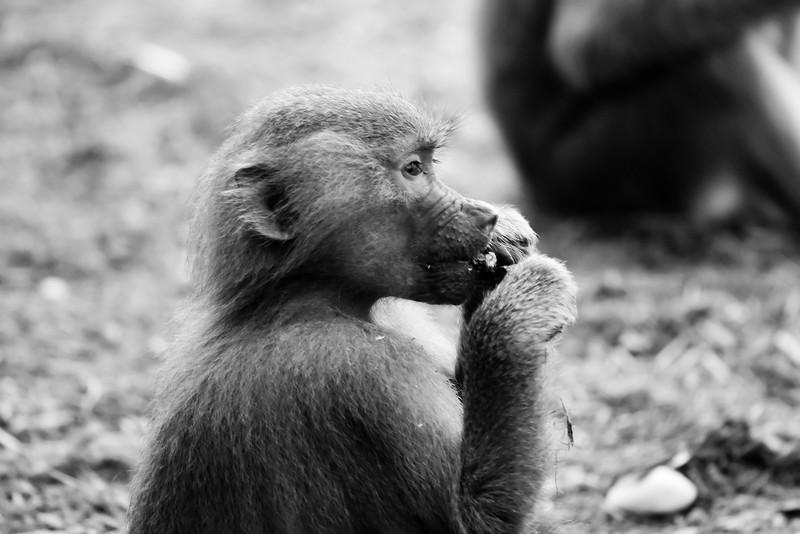 NC Zoo_51011355.jpg