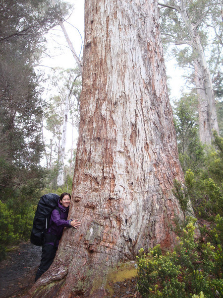 Clearly, trees can have stressful lives. So Jasmijn decided to hug some.