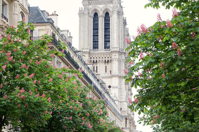 Paris Chestnut Trees