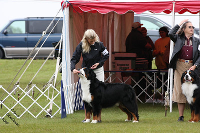 Bred By Exhibitor Dog BMDCA 2010