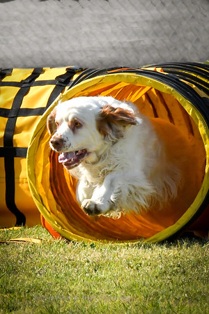 Agility- Madera- March- Friday