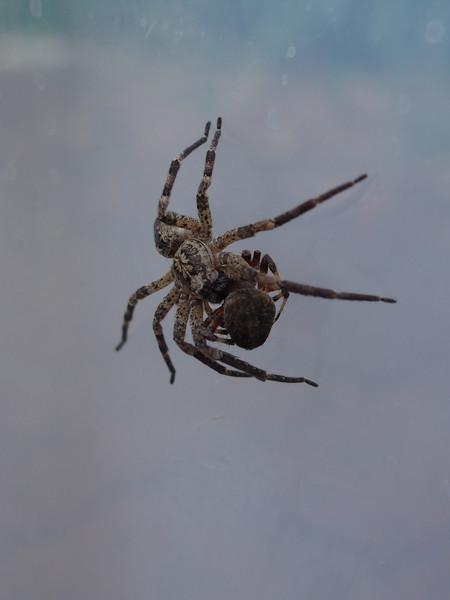 20131012_Spider_25.jpg