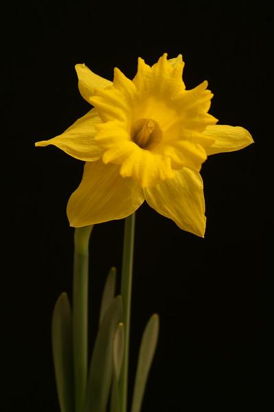 Yel Flower05.jpg