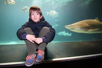New York Aquarium 1/8/12