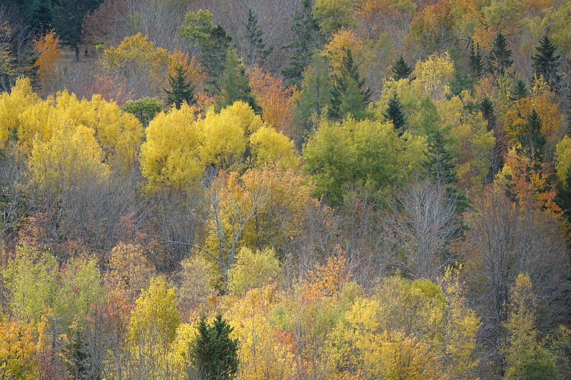 Autumn trees, Blue Hill Maine.jpg