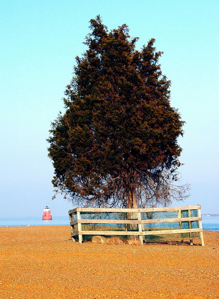 The-Tree-at-Sandy-Point-Cap.jpg