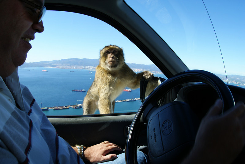 Gibraltar.  The wild apes jumped on our cars as we went buy.