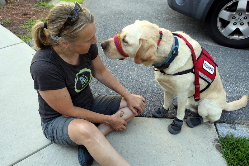 AMY SWEENEY/Staff photo.   Earle gives owner Chris Slavin a disappointed look after he gets his shoes and socks on before a trot on the Danvers Rail Trail on a hot day.  June 2018​