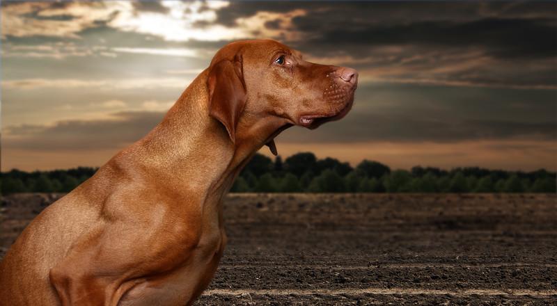 saule-dog-8.jpg