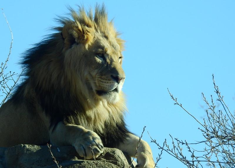 Denver Zoo 2018 (2637).JPG