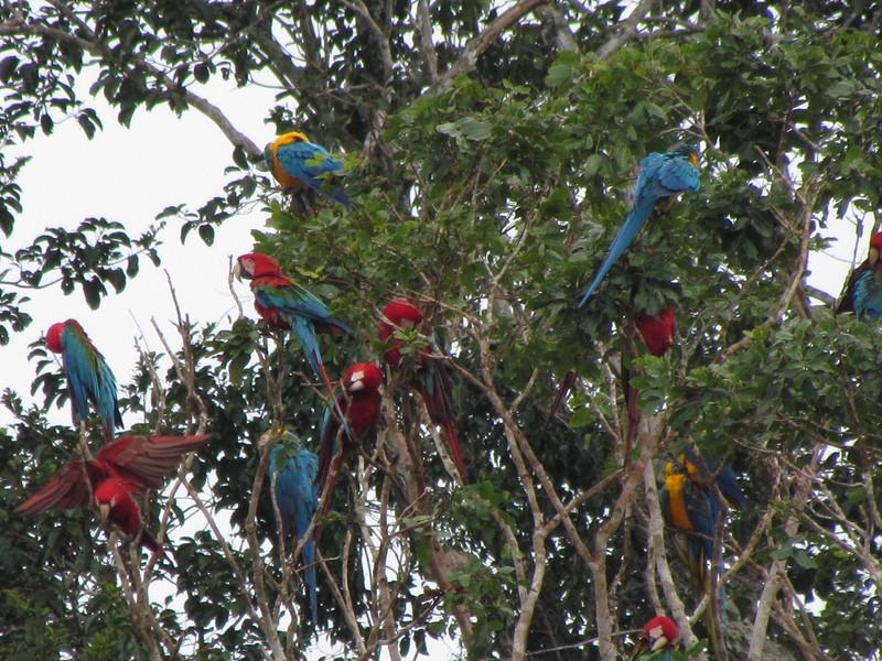 South America adventure Macaw research Peru