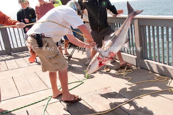 Fishing at M.B. Miller Pier (County Pier) 2013