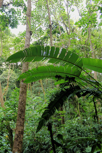 Big Leaves in Jungle.jpg