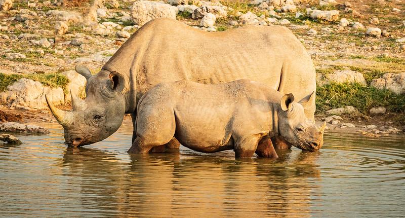 Thirsty rhino 3