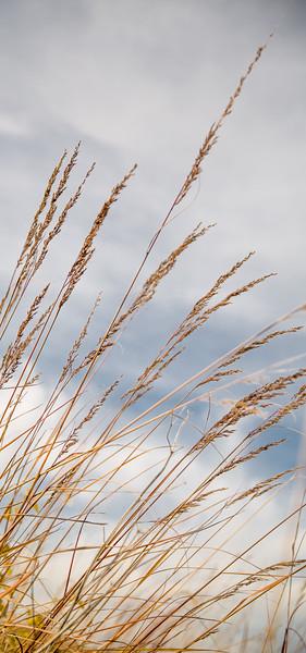 2014 Wheat