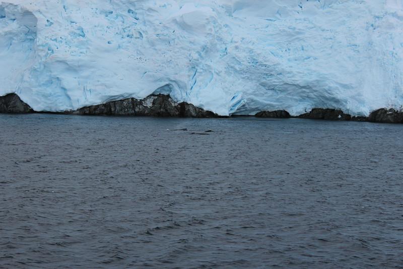 Antarctica 151.JPG