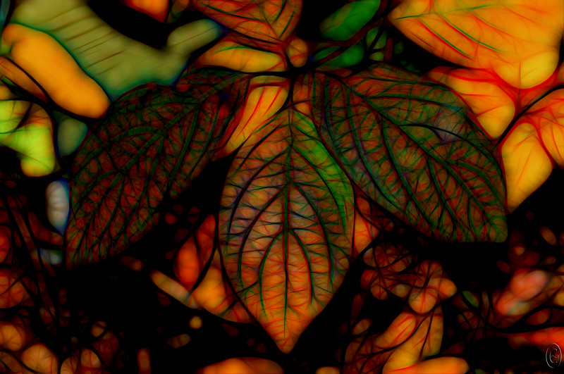 13 Dec 19	Back to the yard scenes again today and another of the stained glass lookalikes since several of you have asked for more.  These are fun and easy to make. This is a triad of leaves from a large bush whose name I don't remember that is part of a hedgerow that currently lines the back side of the front garden area. They have a tiny little white flower in the spring and beautiful yellow leaves in the fall with distinct green veins. I wasn't thinking very far into the future when I planted them believing that I would never consider enlarging that landscaped area. Unfortunately for me I now want to expand it considerably which means I need to transplant all of them. Maybe the smart thing would be to put them all in half 50 gallon barrels that could be moved from place to place as the garden area expands. It might even be a good approach to containing their size.  Other than the conversion this is what the camera recorded. Needing a Frame  Nikon D300s; 18 - 200; Aperture Priority; ISO 250 1/60 sec @ f / 9 with fill flash.
