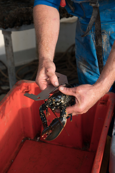 lobster-safari-wales-4.jpg