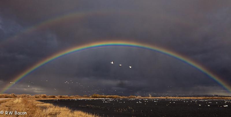 """""""Magic"""" Bosque del Apache San Antonio, NM"""