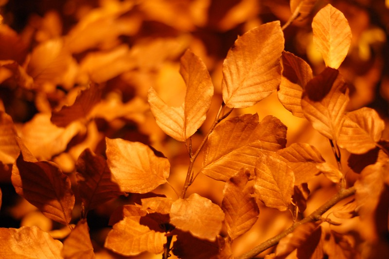 07 - Autumn Leaves - Nov 21st_c.jpg